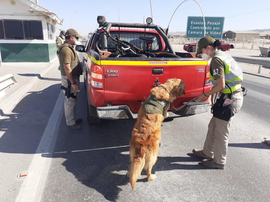 Olfato policial de Fusy ha detectado casi 150 kilos de drogas en menos de 3 meses