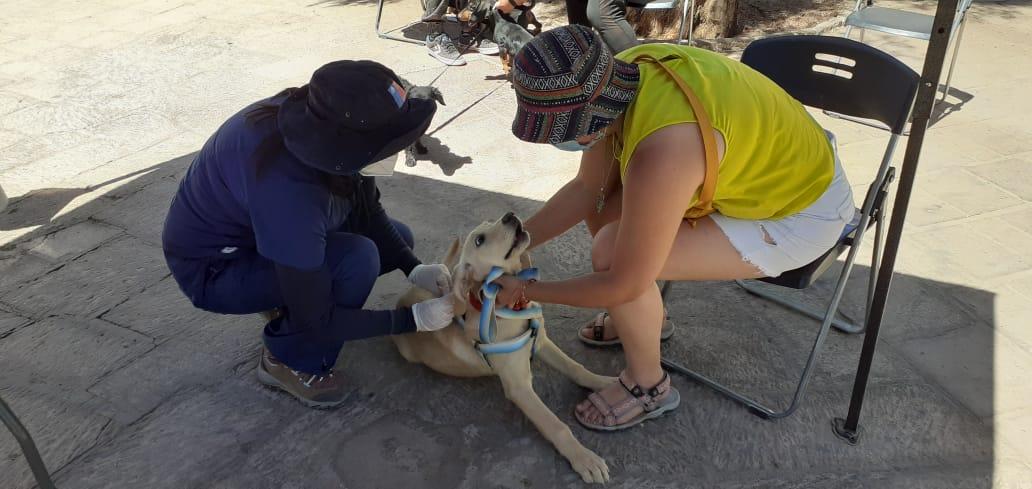 Más de mil mascotas de zonas fronterizas fueron vacunadas