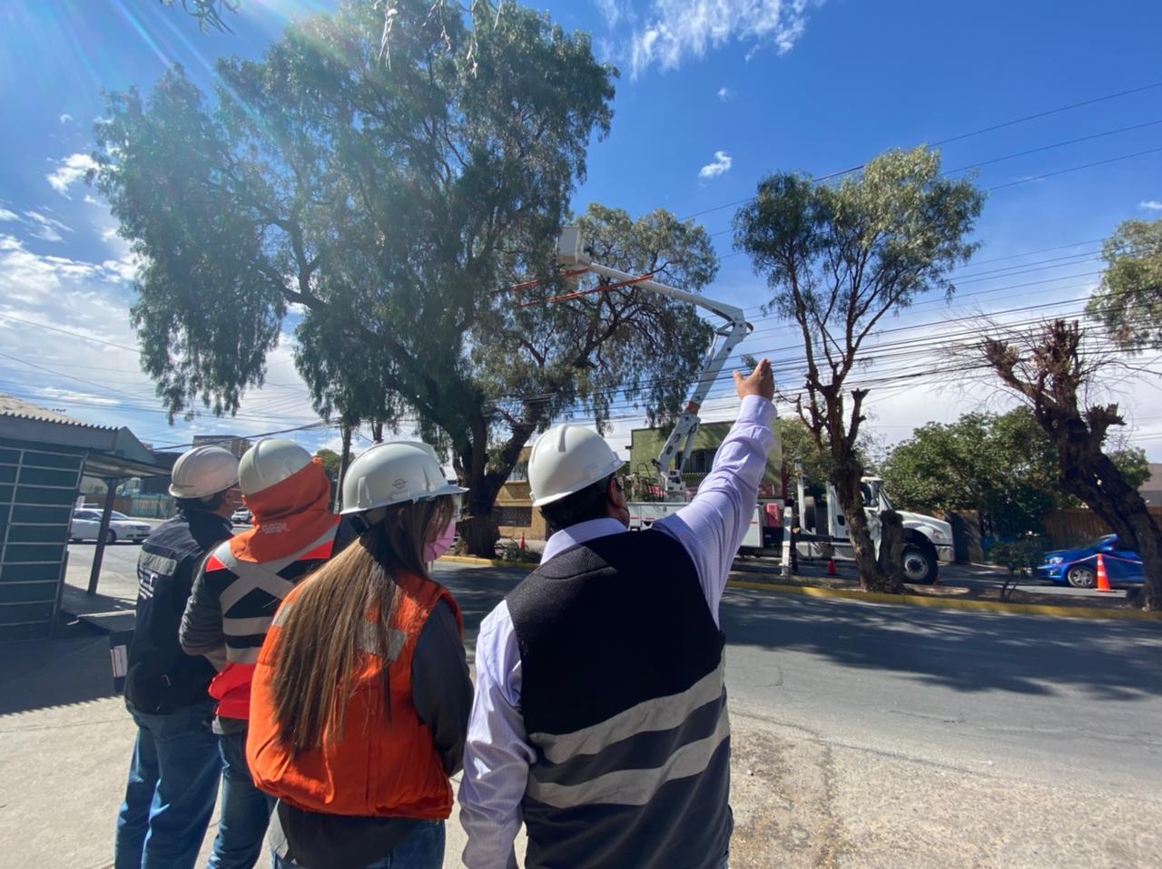 Seremi de Energía y SEC inspeccionaron en Calama trabajos de poda y despejes de árboles