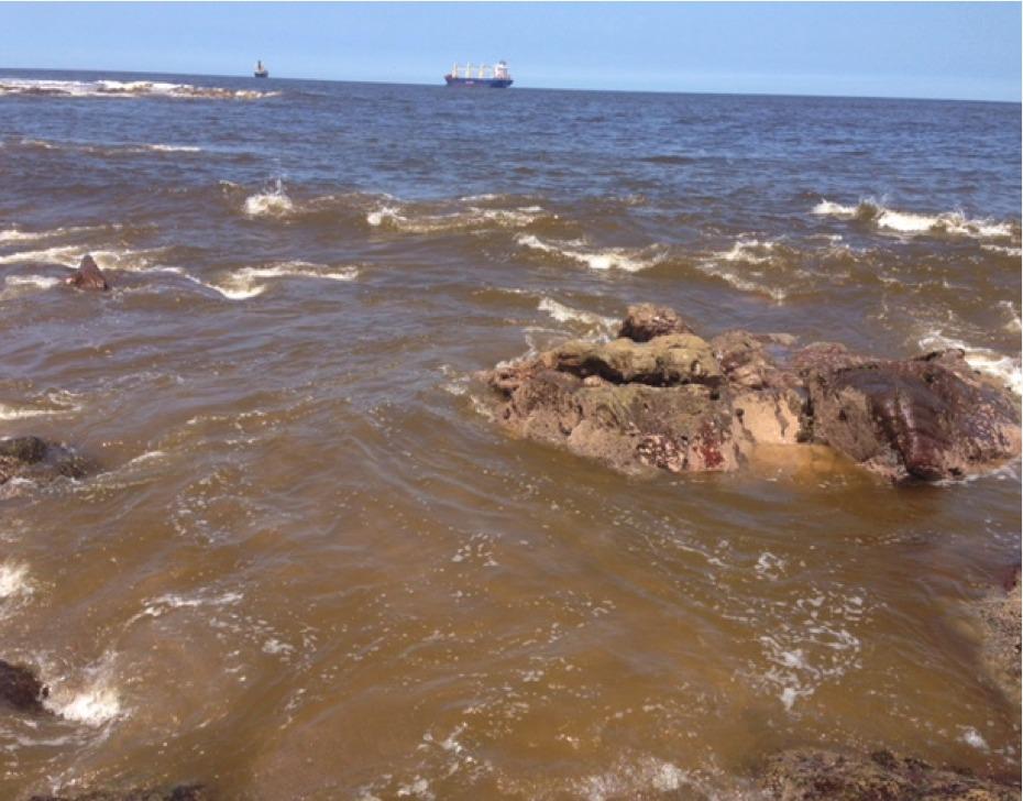 """Con microrganismos nativos buscan mitigar la aparición de """"Marea Roja"""""""