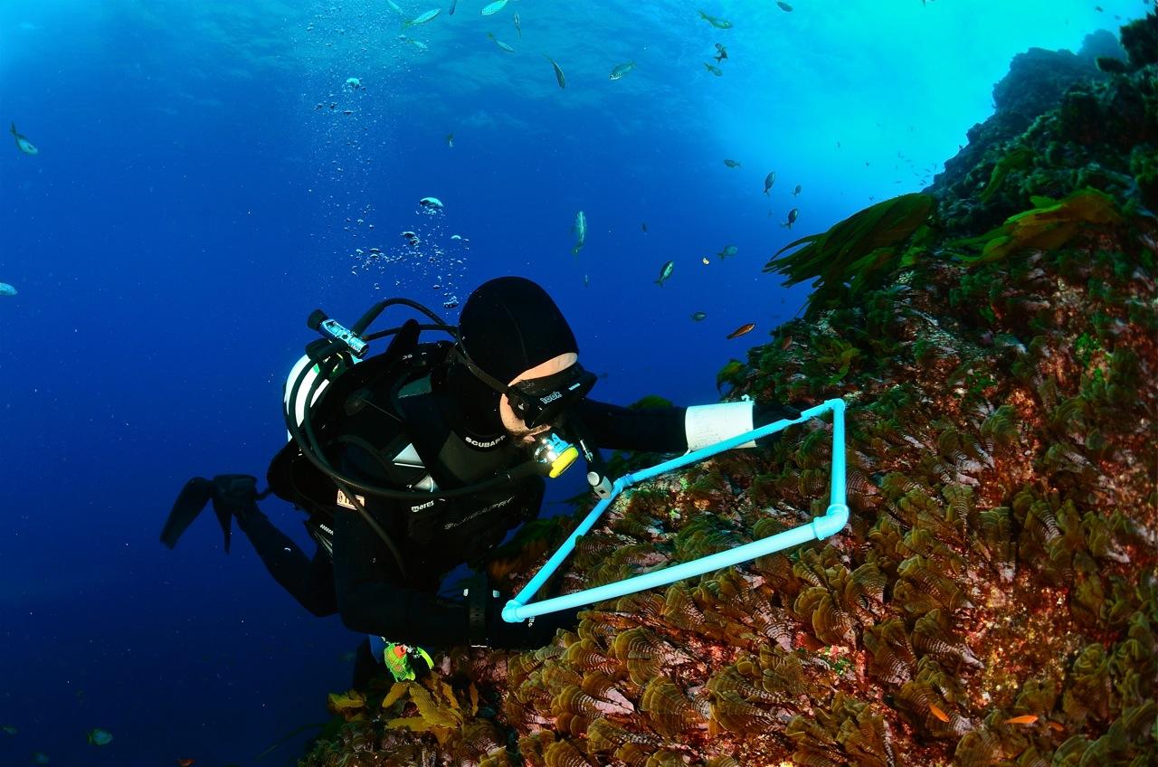 G9 invita a conocer biodiversidad, conservación y uso sustentable del mar de las islas oceánicas