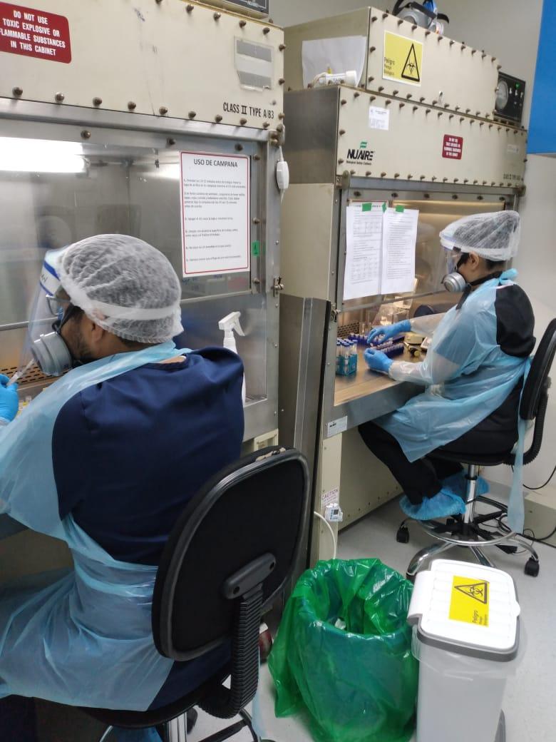 LABORATORIO DE VIROLOGÍA MOLECULAR DE LA UA HA ANALIZADO 4.400 MUESTRAS PCR A MENOS DE DOS MESES DE INICIAR LAS PRUEBAS