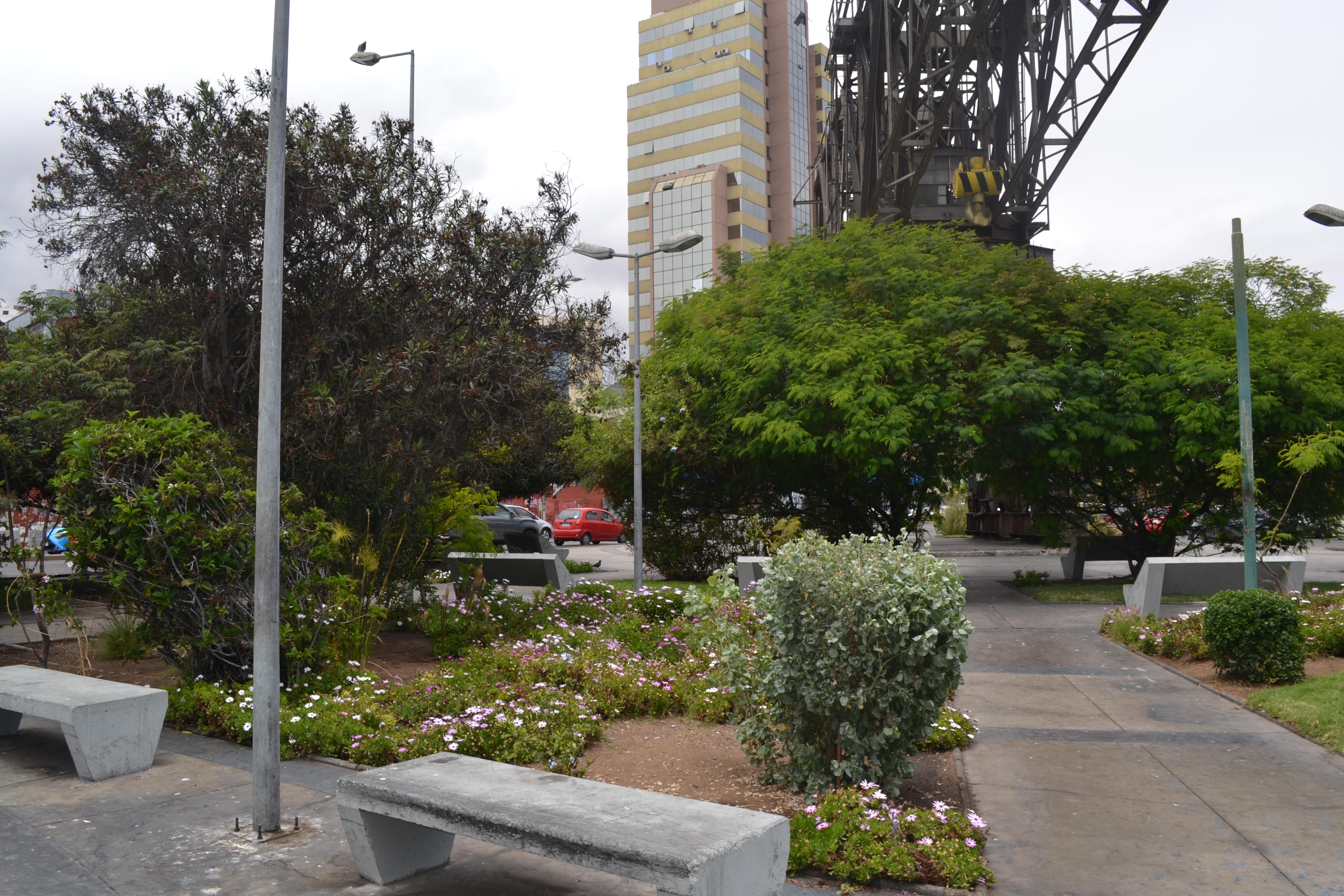 Puerto Antofagasta continúa alimentando su pulmón verde con el apoyo de CONAF para su área de transición puerto-ciudad