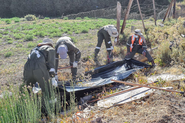 Con empresa especializada limpian terrenos con Mostaza Negra