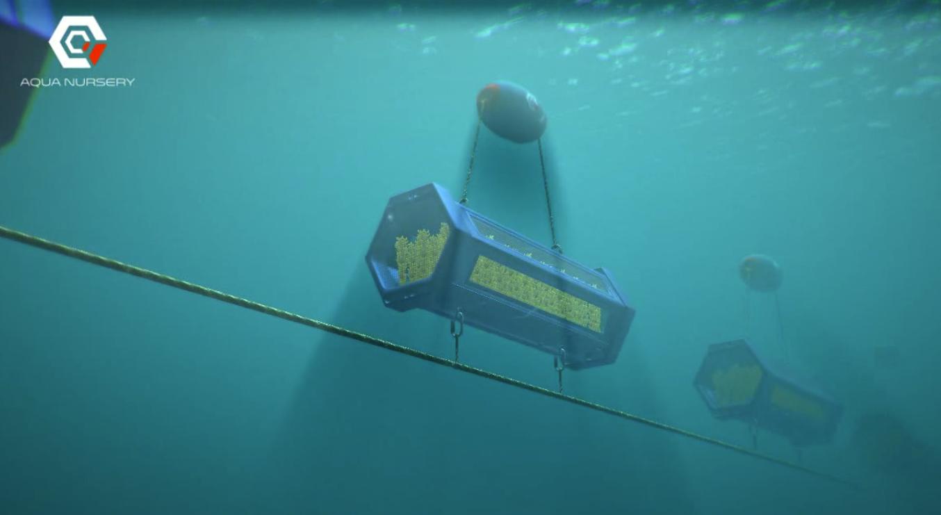 Aquanursery: Revolucionaria tecnología en acuicultura creada por expertos