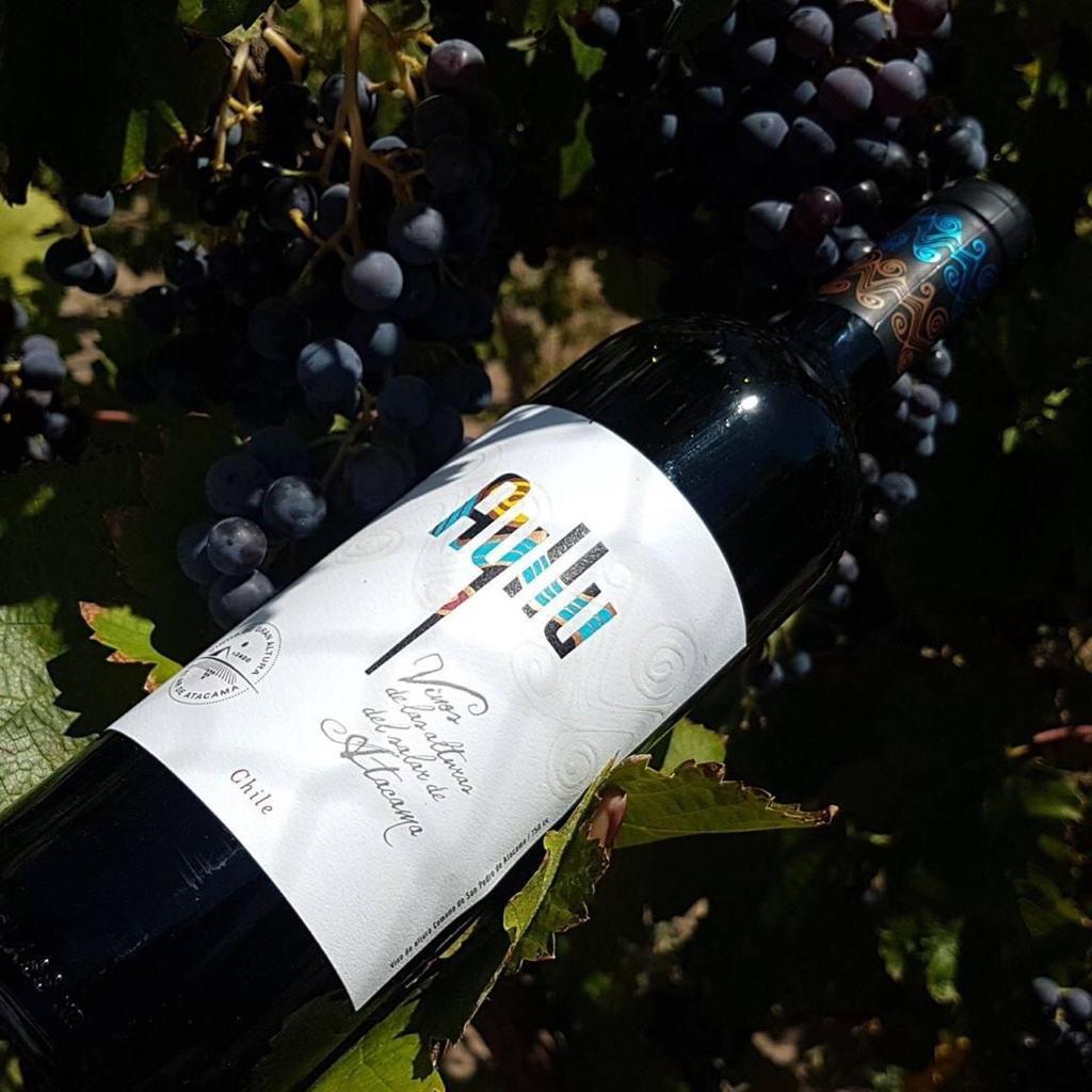 Vino atacameño se exportará a nivel mundial